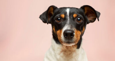 10 Tips to Make Your Dog Feel Safe at Home main