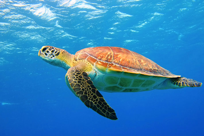 3 Best Things to See and Do on a Boat Trip From Zakynthos turtle