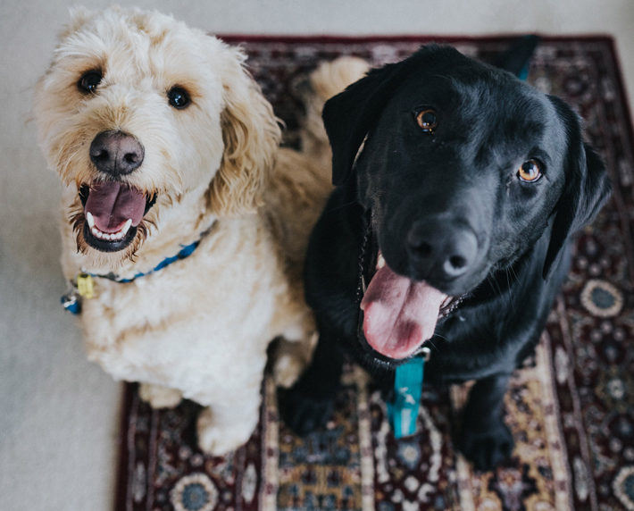 4 Ways to Keep Your House Clean With Pets dogs