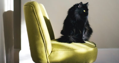 4 Ways to Keep Your House Clean With Pets main