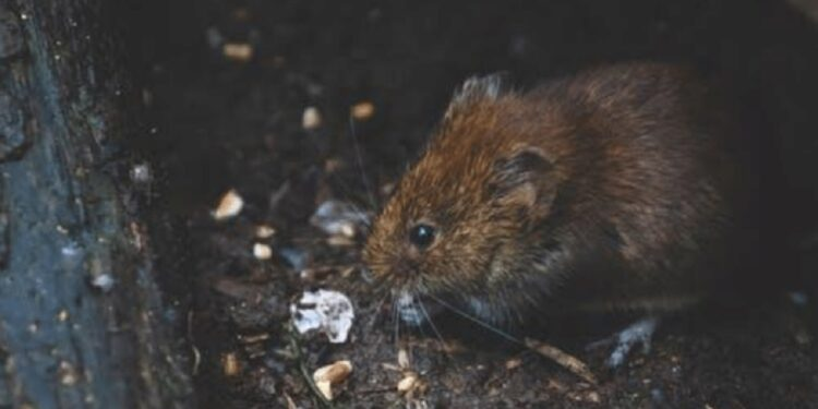 4 Ways to Protect Your Home from Rodents main