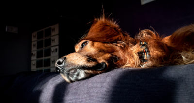 5 Reasons Your Dog Might Seem Low and Lethargic walk