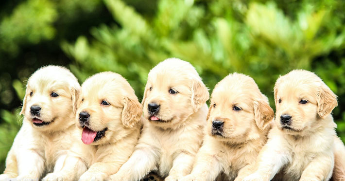 A Guide to Caring For Your First Puppy care