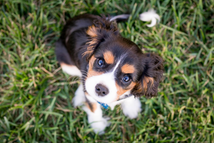 A Guide to Caring For Your First Puppy dog