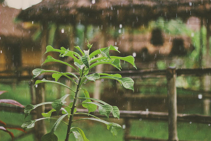 Best Methods to Save Water in a Garden collect