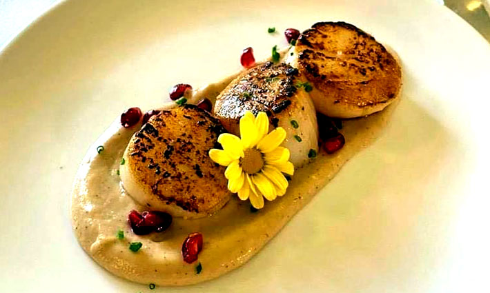 Darcy's Brasserie & Bar at Mosborough Hall Restaurant Review scallop