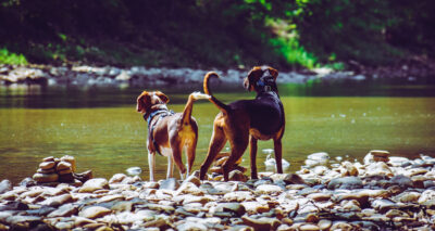 Everything You Need to Know About Joint Health for Dogs main