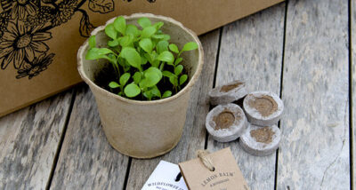Get Growing Kits from Warner's Gin Review main