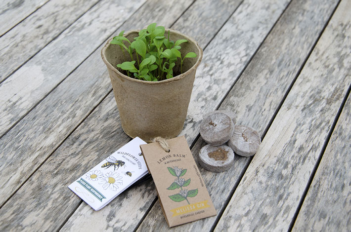 Get Growing Kits from Warner's Gin Review seeds