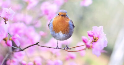 How To Attract Birds To Your Garden And Why You Want Them There mainHow To Attract Birds To Your Garden And Why You Want Them There main
