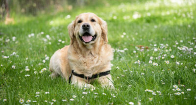 How To Prevent Dogs From Having Itchy Skin main