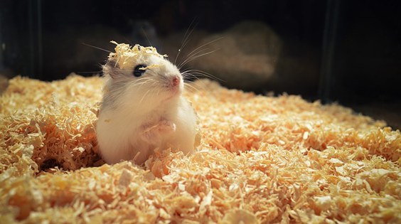 How To Take Great Care Of Your hamster 1