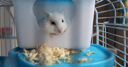 How To Take Great Care Of Your hamster main