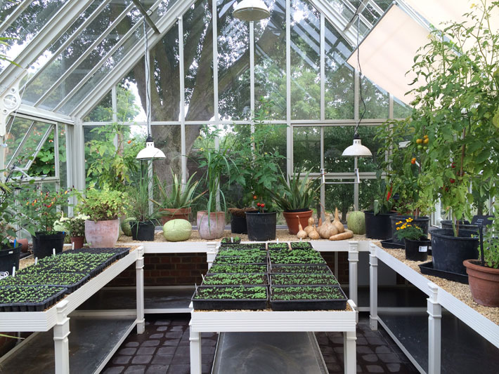 How a Greenhouse Can Extend the Growing Season Through Winter light