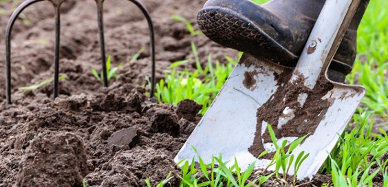 How to Get Your Garden Ready for Summer main