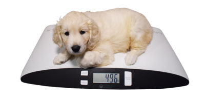 Is Your Pet Putting On The Pounds main