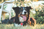 Keeping Your Pet Safe This Summer main