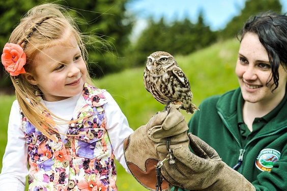 Lightwater Valley 2017 review owl falconry