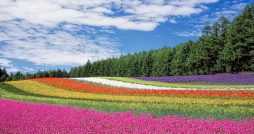 Most Popular Flower Colours by Budget & Gender Revealed main