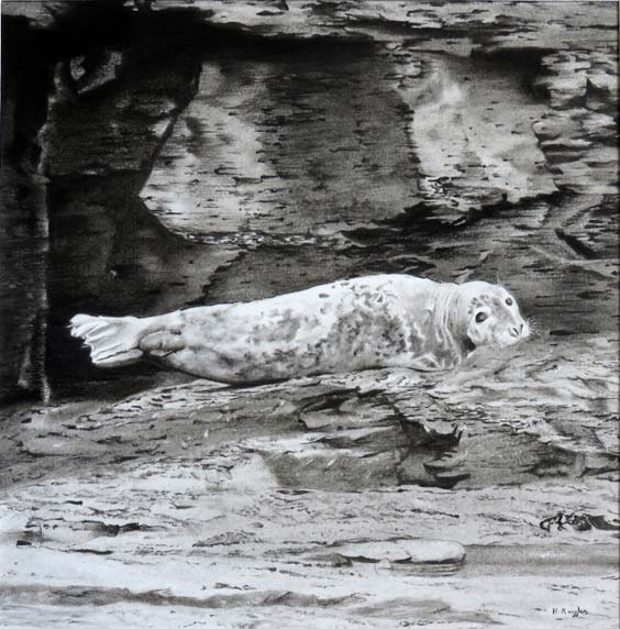 Saltwick Bay gallery seal