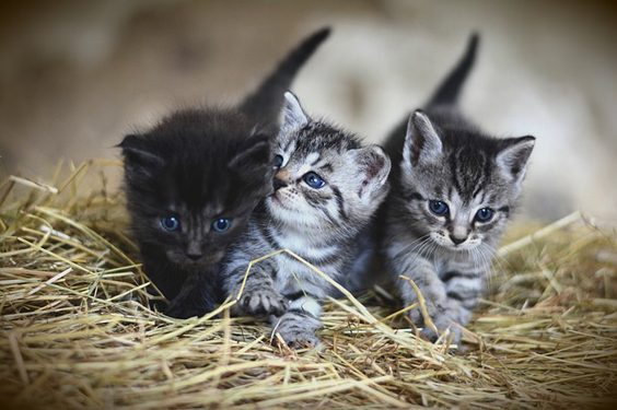 Seven Things to Consider Before Rescuing a Cat pair