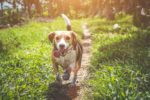 Seven Unusual Types of Dog-Friendly Accommodation in Yorkshire main