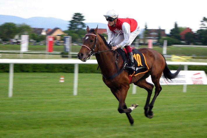 Stradivarius Eyes Arc After Goodwood Cup Win horse