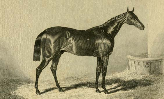 The First Dead Heat at Doncaster St Leger Charles XII in his stable by John Frederick Herring. Engraving from The pictorial gallery of English race horses by George Tattersall, 1850.