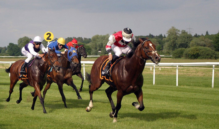 Tips for Choosing the Best Horse Betting Website racing