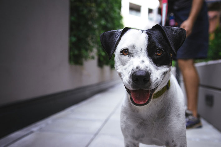 Top 6 Must-Buys For Canines dog