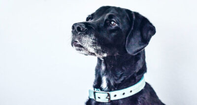Top 6 Must-Buys For Canines main