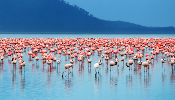 Travel Insurance Explained Adopts a Flamingo from Flamingo Land group