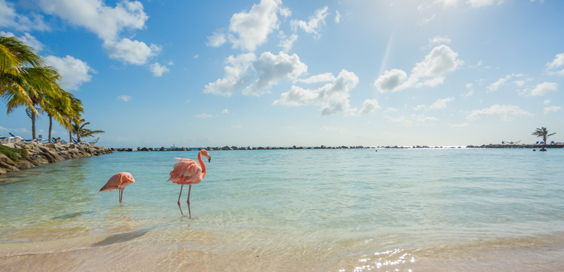 Travel Insurance Explained Adopts a Flamingo from Flamingo Land solitary