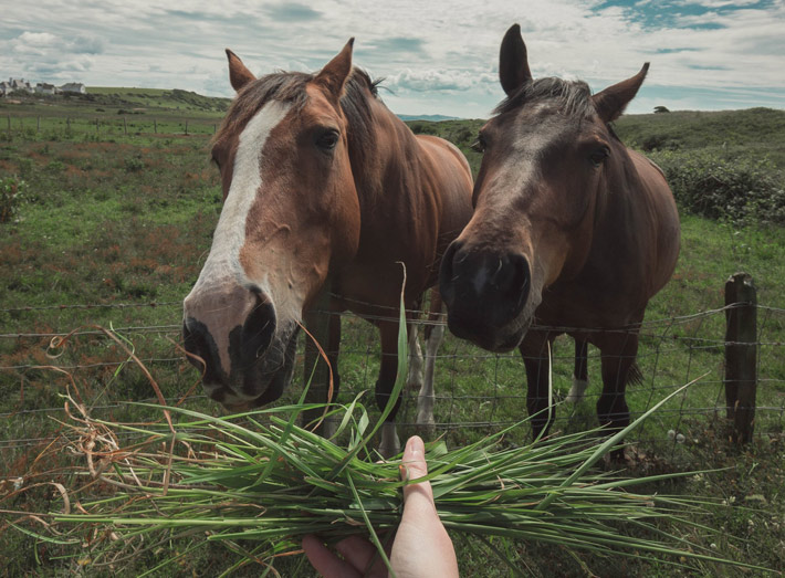 What To Feed A Veteran Horse The Beginners Guide food
