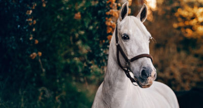 What To Feed A Veteran Horse The Beginners Guide main