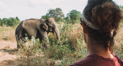 Why Everyone Should Experience a Safari Once in Their Life main