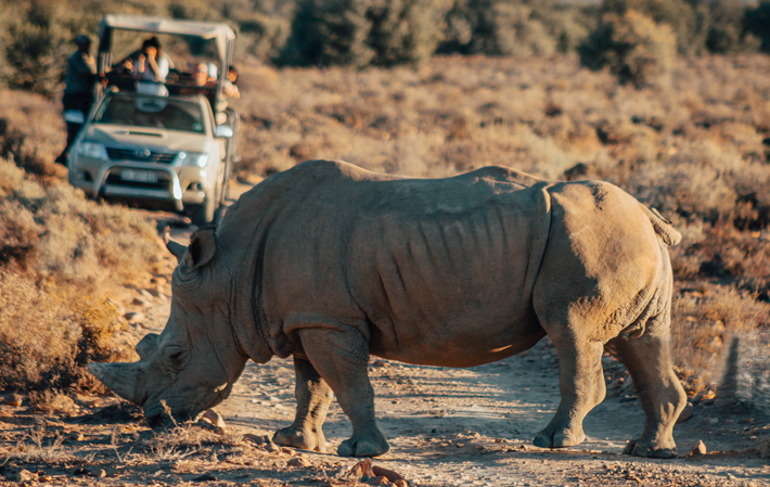 Why Everyone Should Experience a Safari Once in Their Life rhino