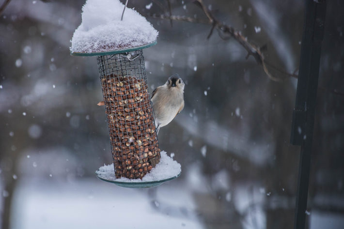 Winter Additions for Your Garden bird