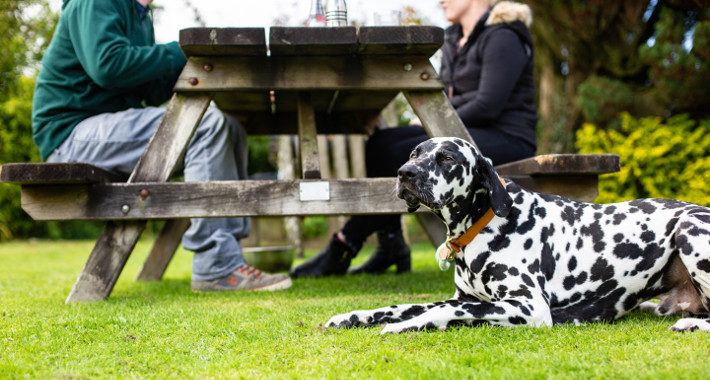 Yorkshire's Most Dog-Friendly Destinations eateries
