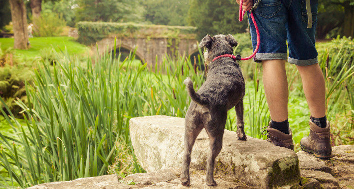 Yorkshire's Most Dog-Friendly Destinations gardens