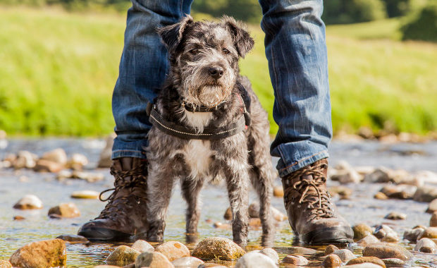 Yorkshire's Most Dog-Friendly Destinations main