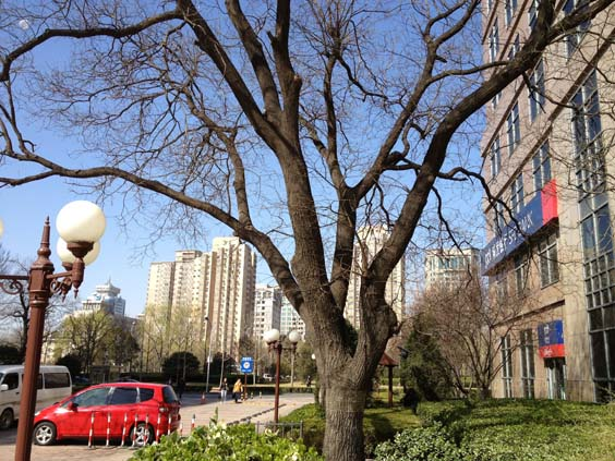 china travel review in drag tree
