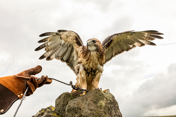 coniston hotel and spa review skipton falconry