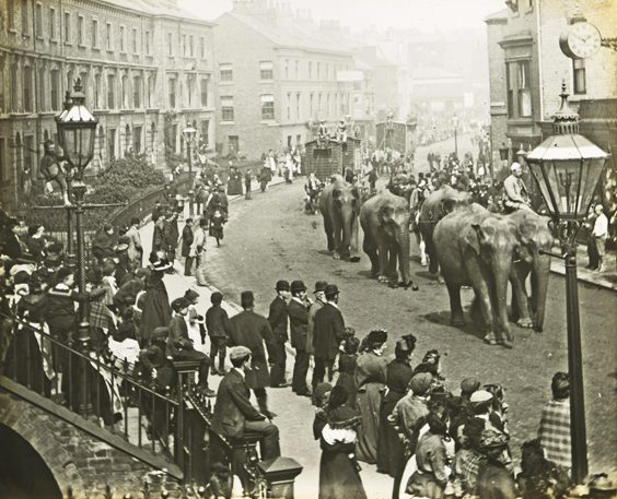historic scarborough in old photographs circus elephants
