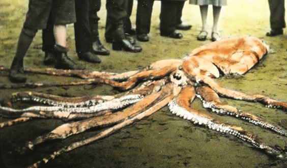 historic scarborough in old photographs giant squid