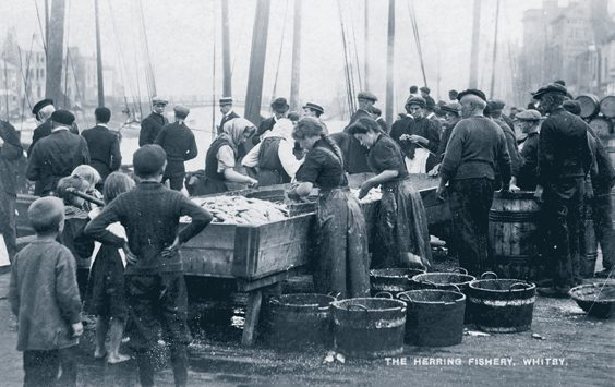 historic whitby photos 'gipping' herrings