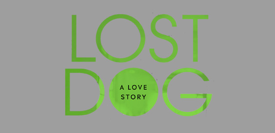 lost dog kate spicer book review logo main