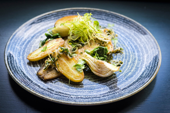 refectory principal york restaurant review plaice