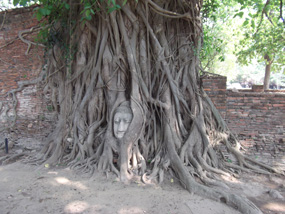 thailand Buddha head nestled in a tree