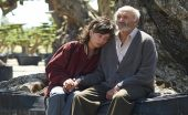 the olive tree film review